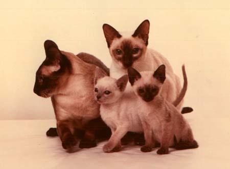 Munchkin Family